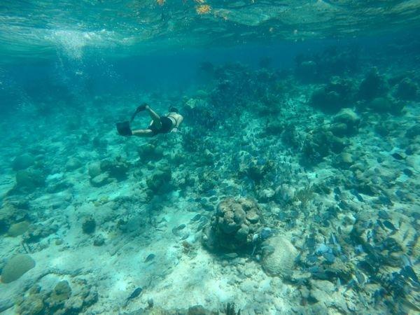 Snorkel em Buck Island